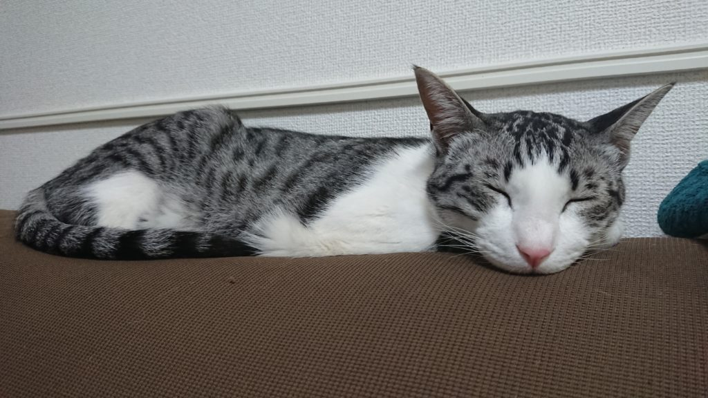 愛猫がくつろいでいる様子。